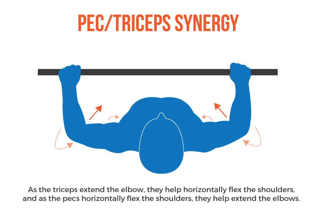 Pec/Triceps synergy How to Bench